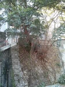 Baum wächst an Wand