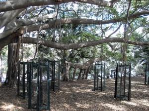 Bäume in Brisbane (Reisetagebuch Australien: Nächte (und Tage) in Brisbane)