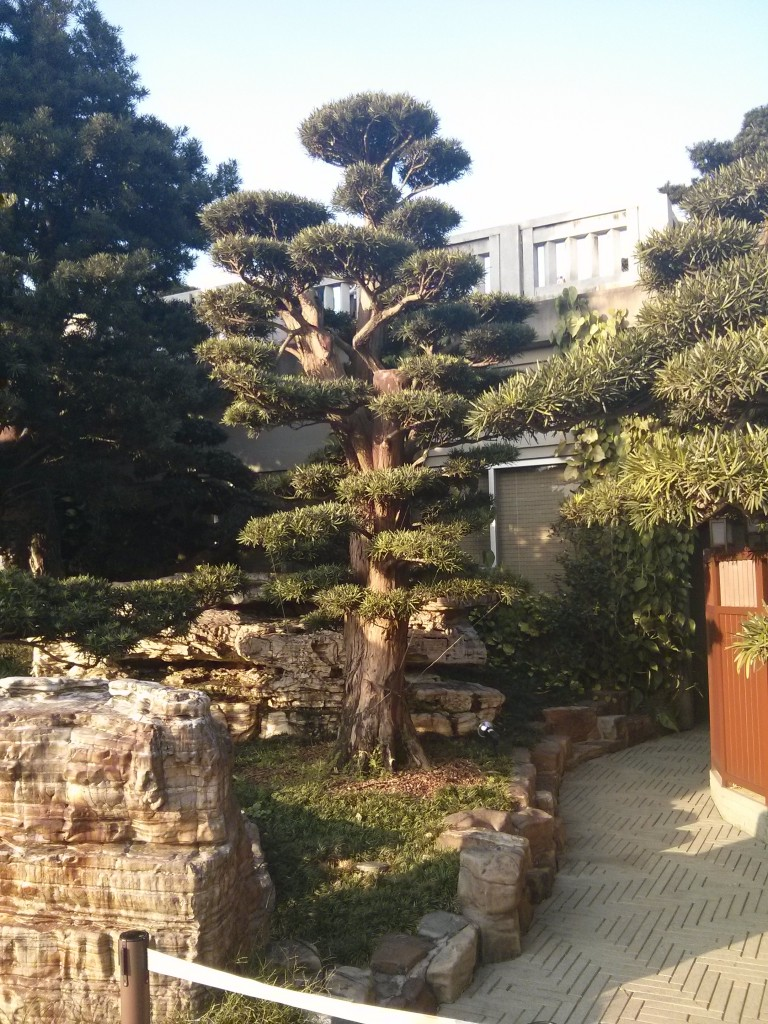 Bonsai im Nam Lian Garden