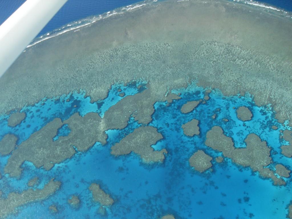Korallenriff im Great Barrier Reef