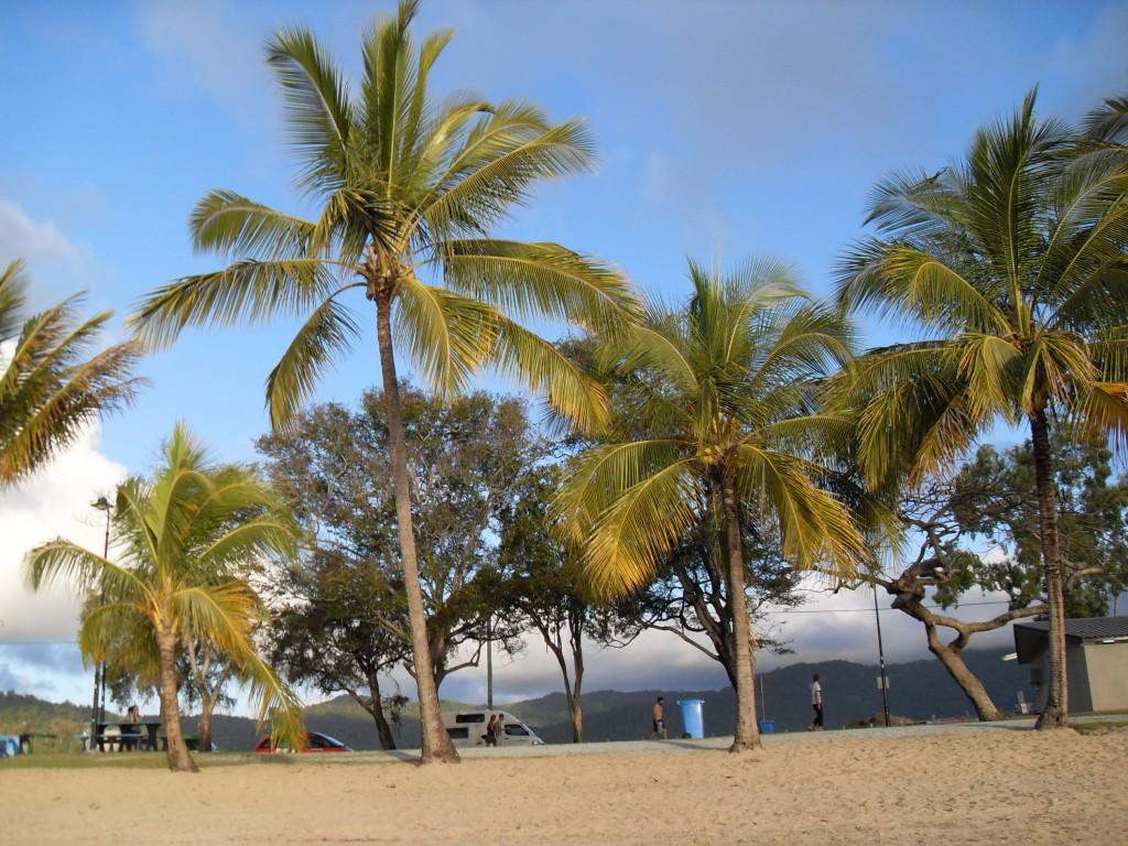 Palmen Airlie Beach