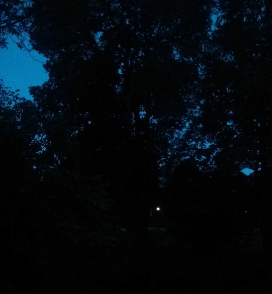 Sicht auf Park von meiner Wohnung Wedel