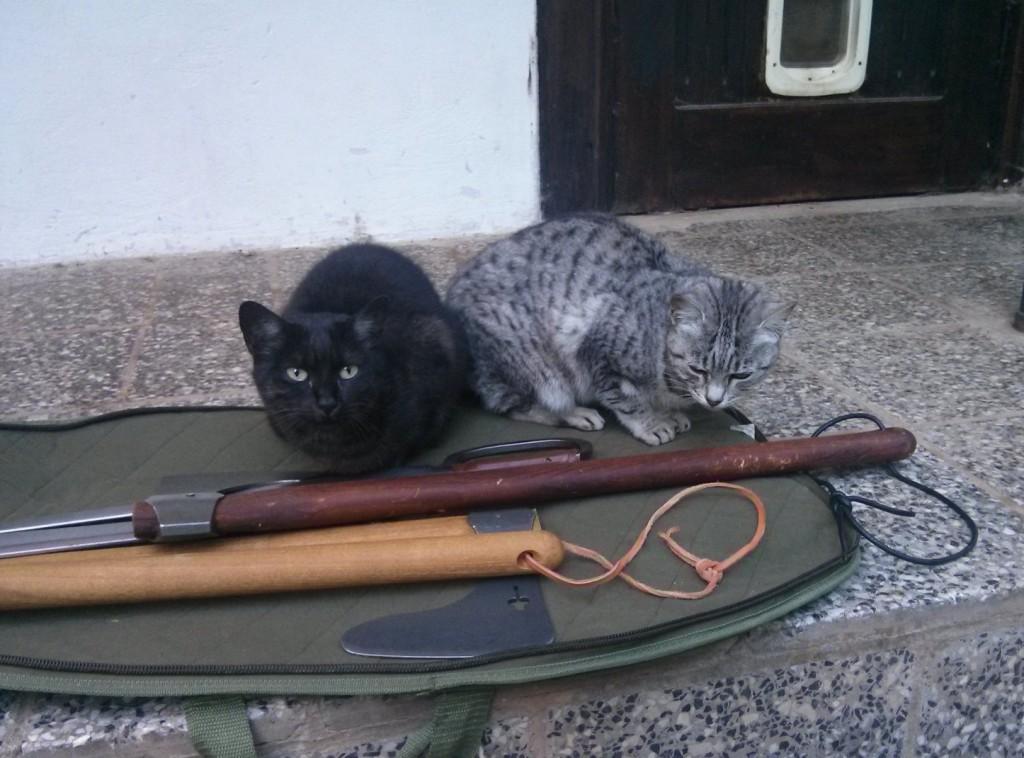 Die Katzen von Schloss Heinrichshorst