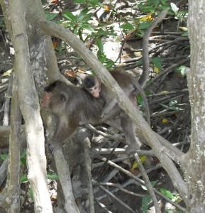 Kleine Affen in Vietnam