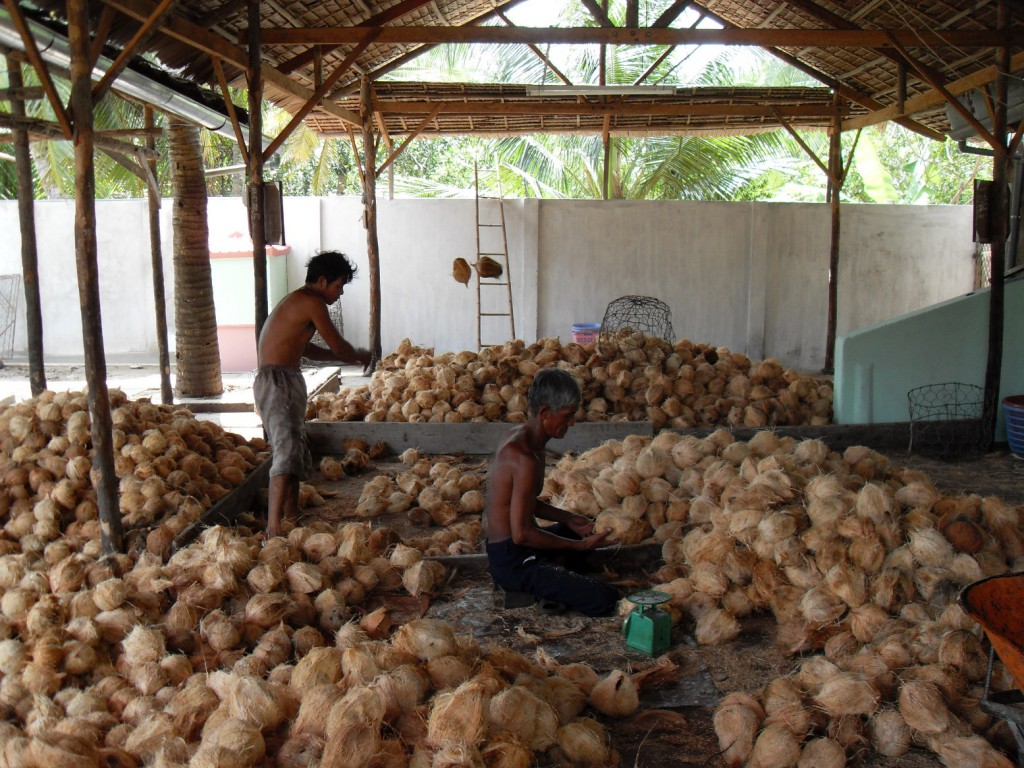 Verarbeitung von Kokosnüssen im Mekong-Delta in Vietnam