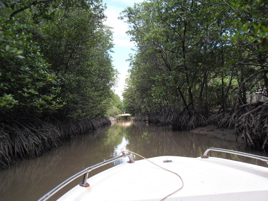 Mangrovenwald in Vietnam