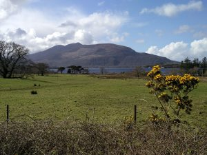 Ginster und Landschaft im Killarney Nationalpark (Wandern in Irland Teil zwei: Wanderung im Killarney Nationalpark)
