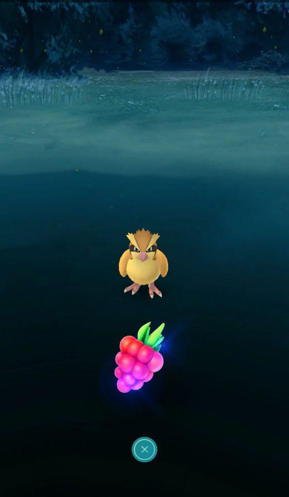 Pokémon Go Taubsi mit Himmihbeere