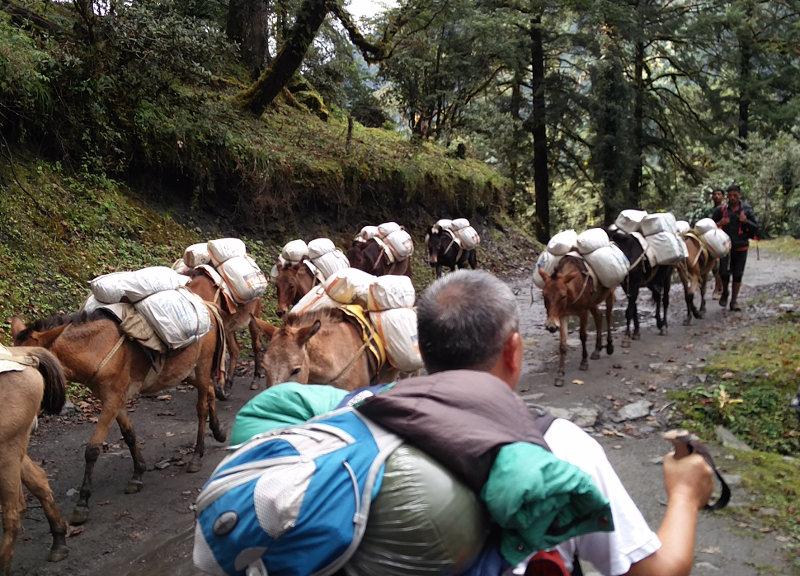 Eselkarawane auf unserem Weg nach Ringmo und Takasindu