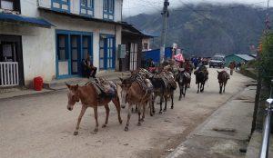 Eselkarawane in Phaplu (Nepal: Mit dem Jeep nach nach Phaplu)