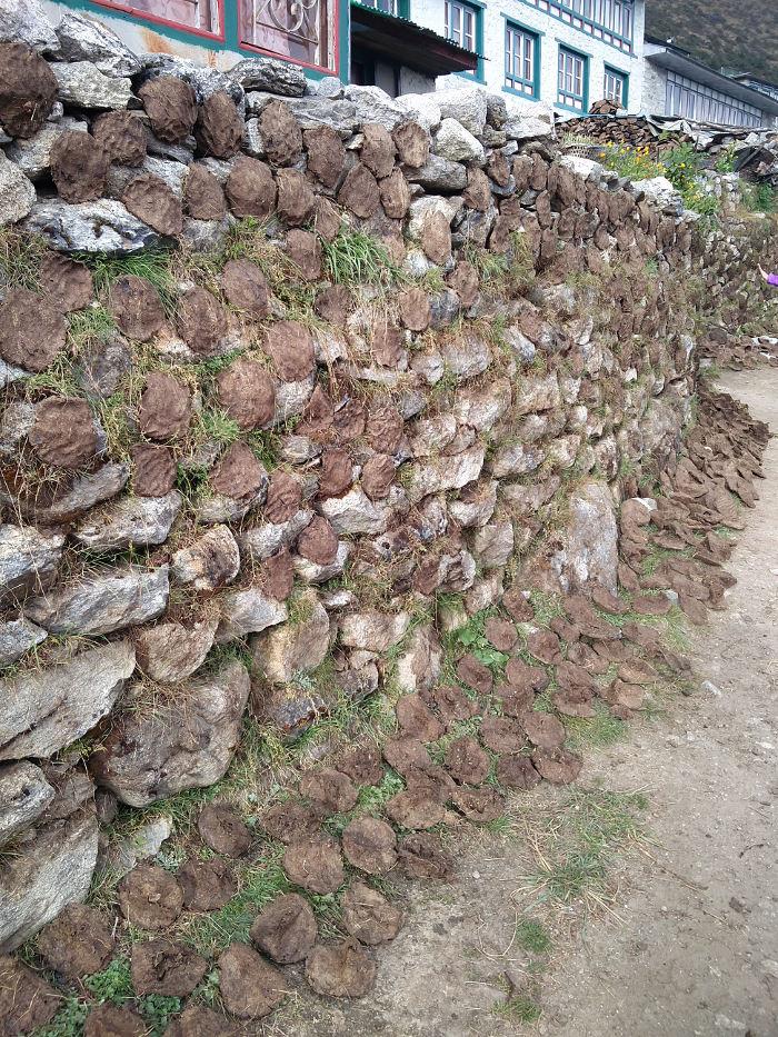 Kuhfladen zum Trocknen an der Wand bei Khumjung Valley