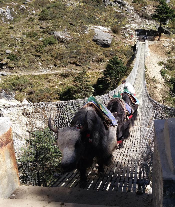 Yak Karawane auf Brücke