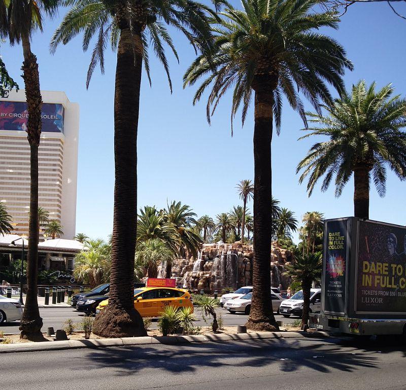Palmen auf dem Strip von Las Vegas